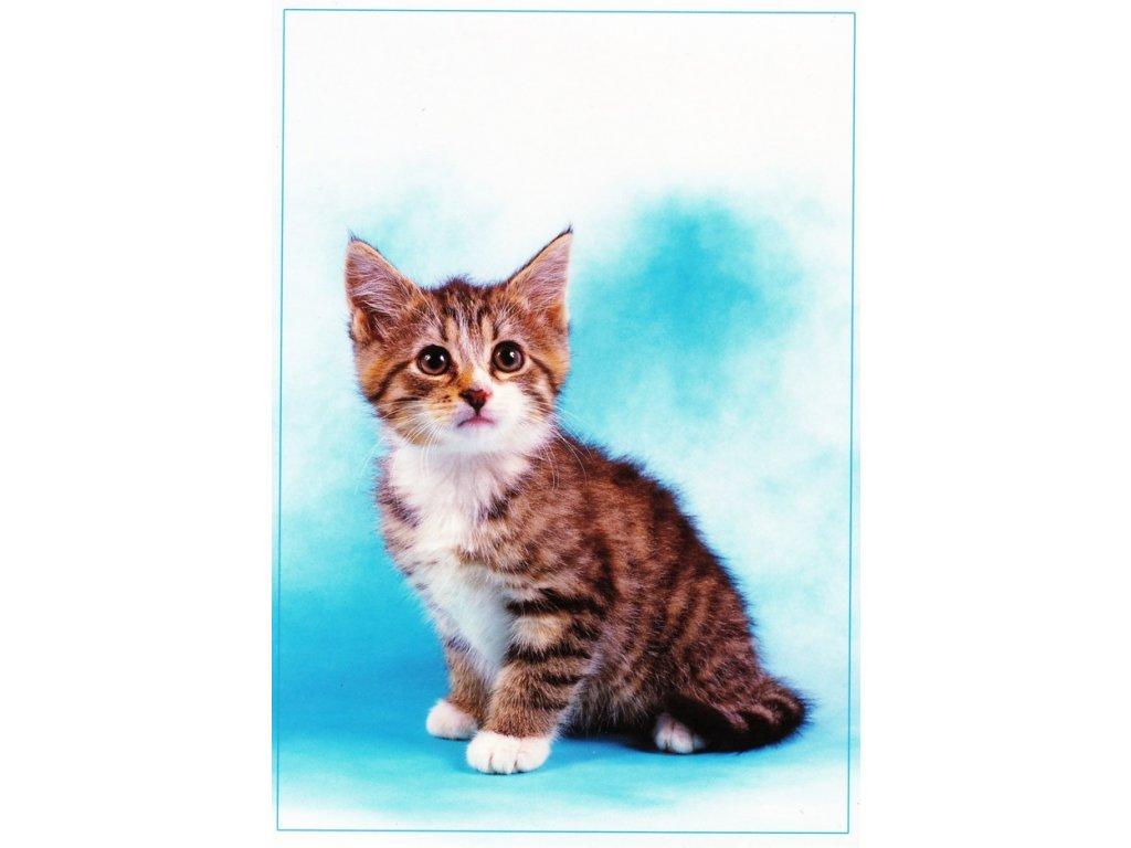 Pohlednice kočka 26