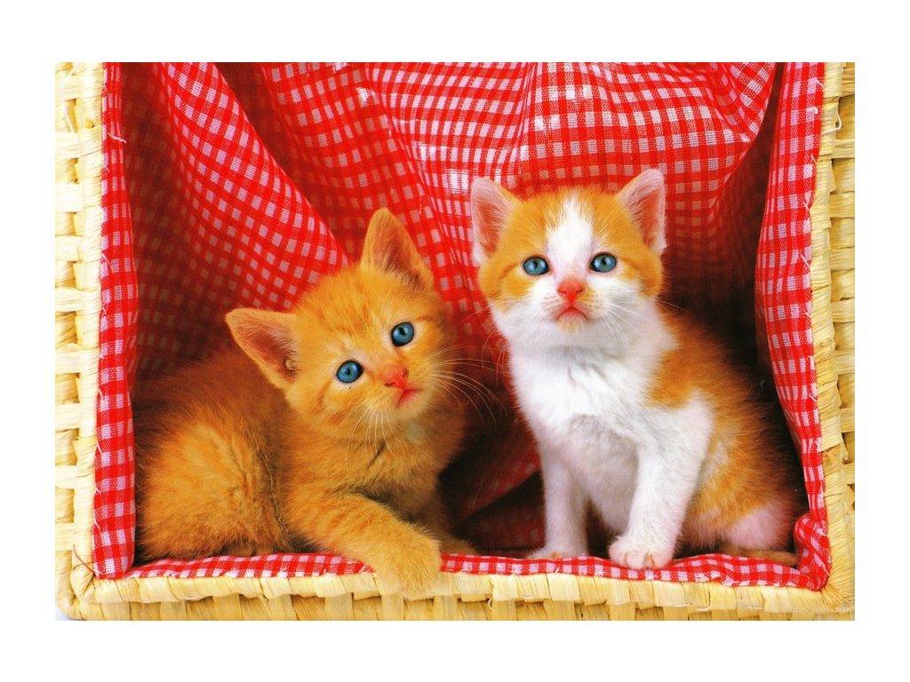 Pohlednice kočky 28