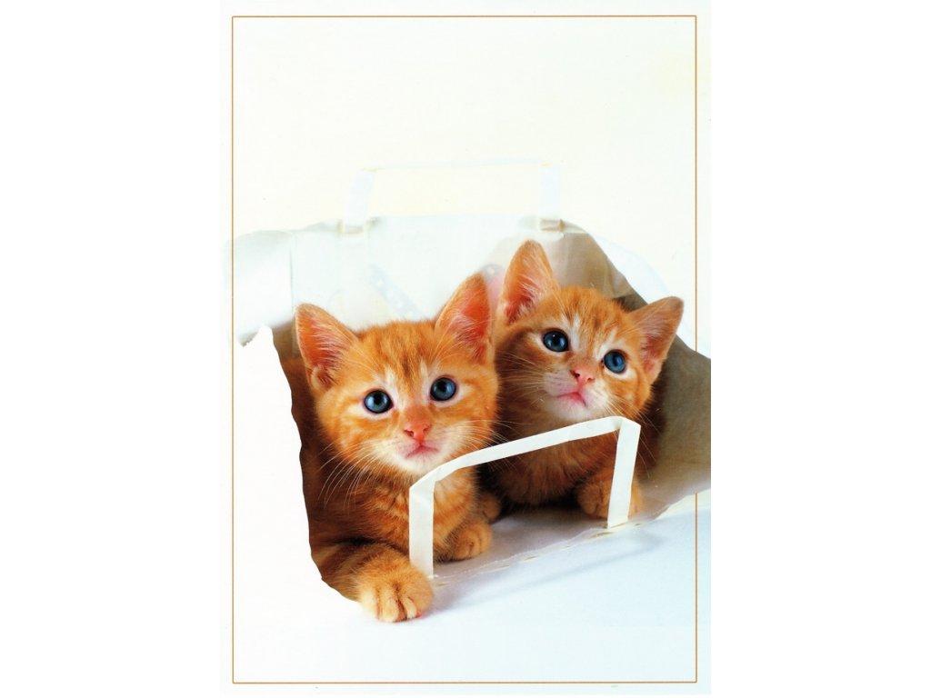 Pohlednice kočky 29
