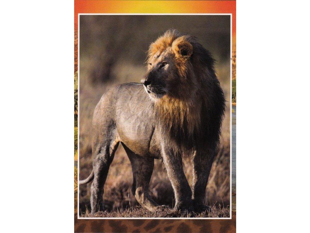 Pohlednice Lev 3