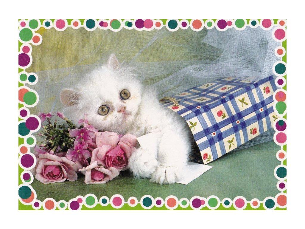 Pohlednice Kočičí dáreček