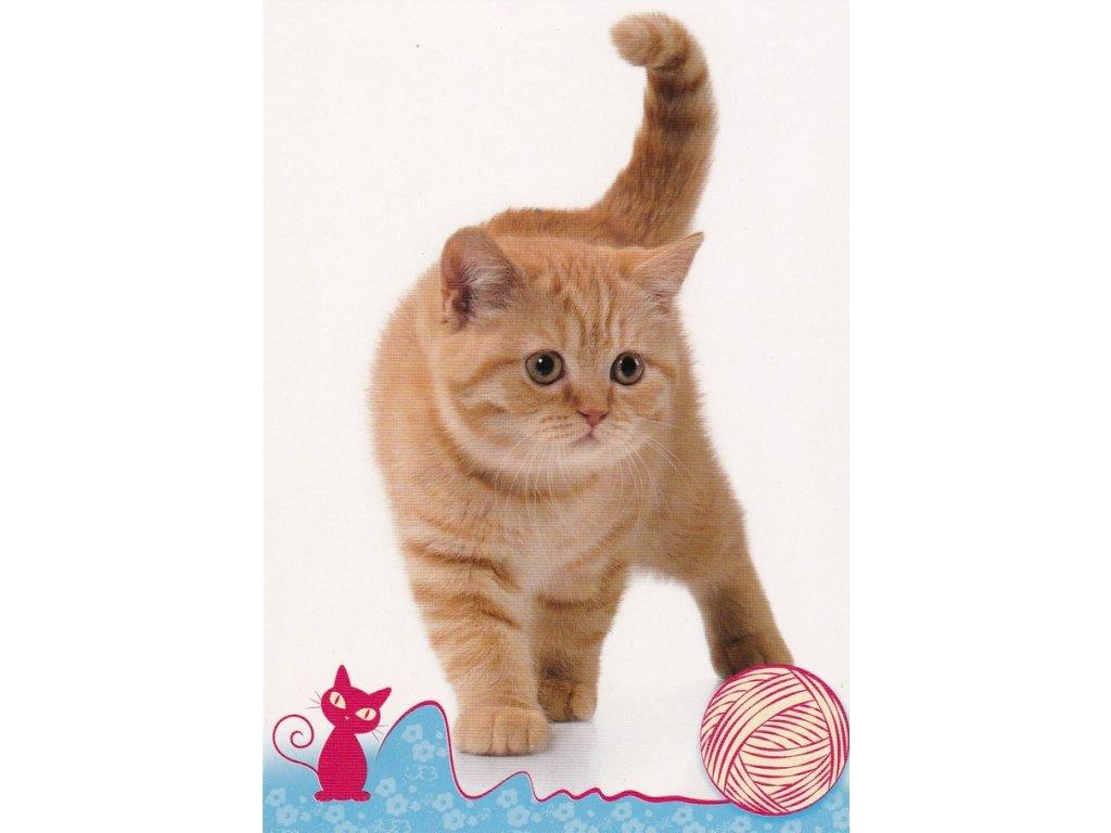 Pohlednice kočka 32