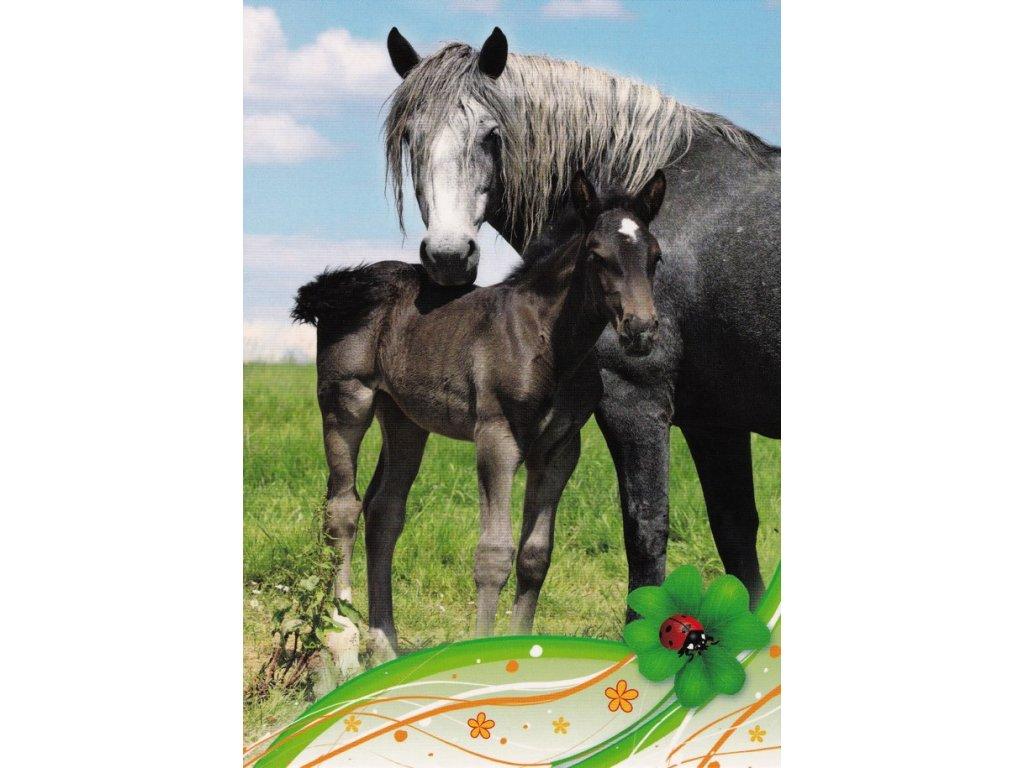 Pohlednice koně 22