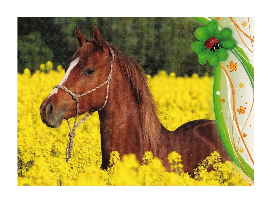 Pohlednice kůň 23