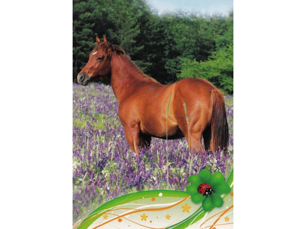 Pohlednice kůň 24
