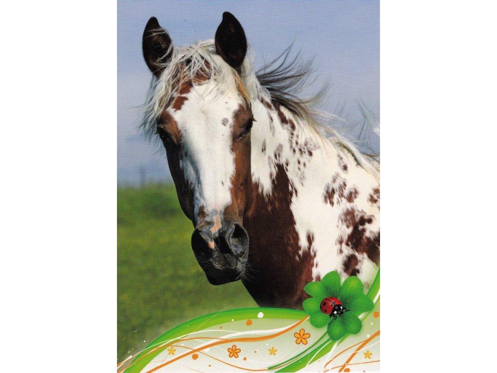 Pohlednice kůň 26