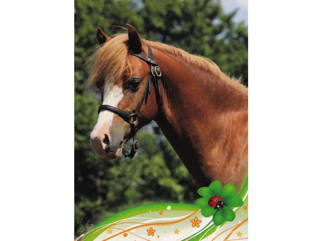 Pohlednice kůň 27