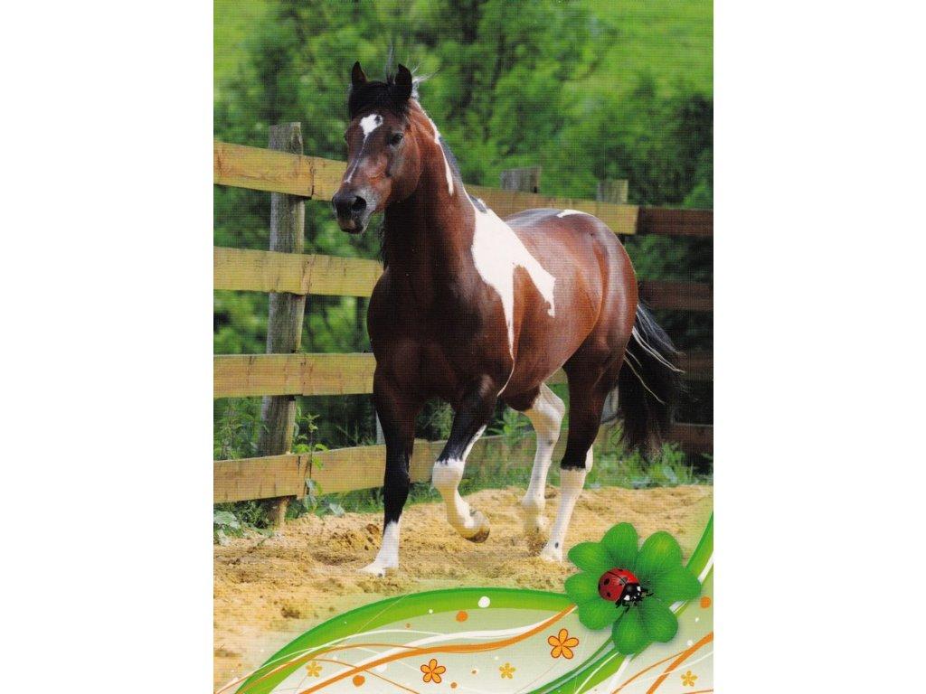 Pohlednice kůň 20