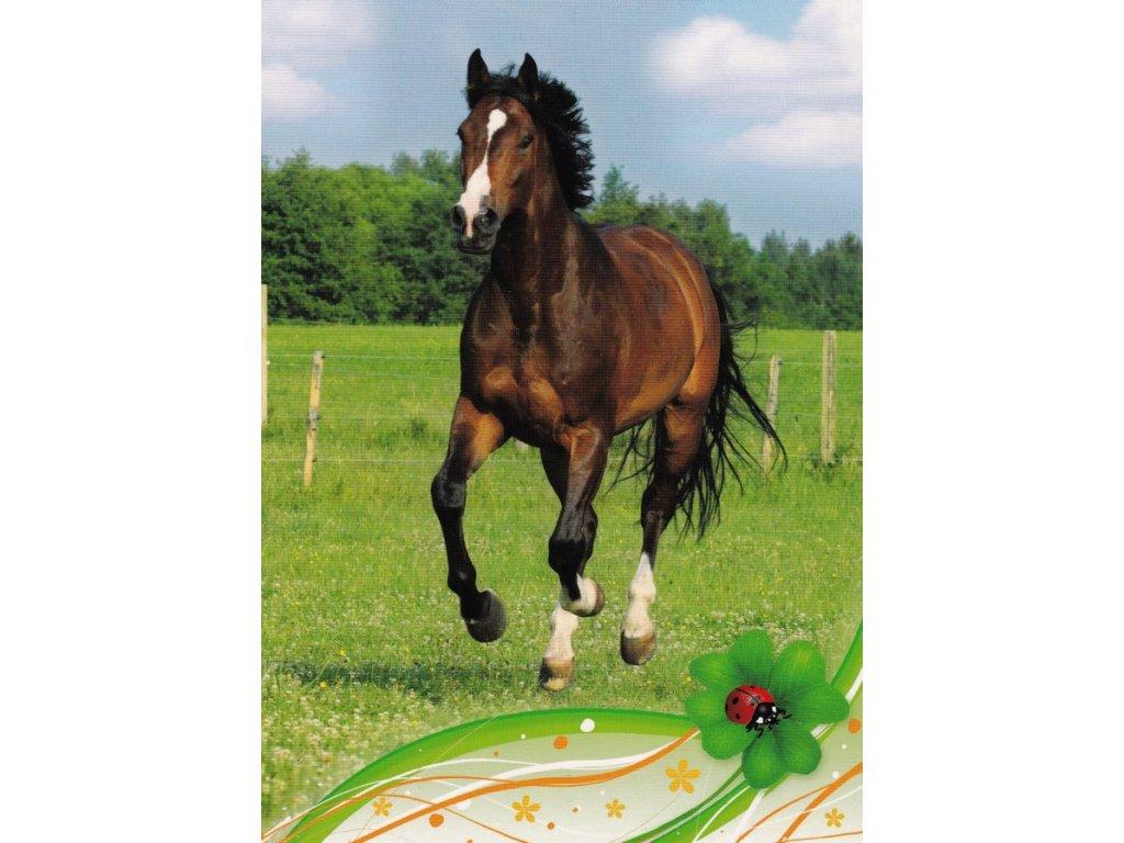 Pohlednice kůň 29