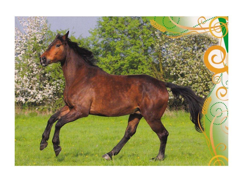 Pohlednice kůň 31