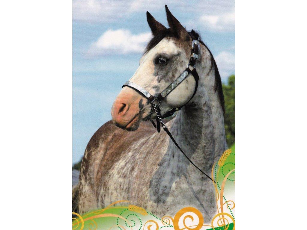 Pohlednice kůň 32