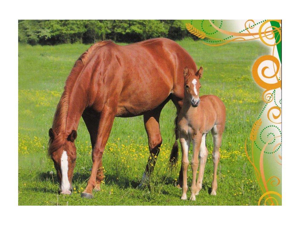 Pohlednice koně 34