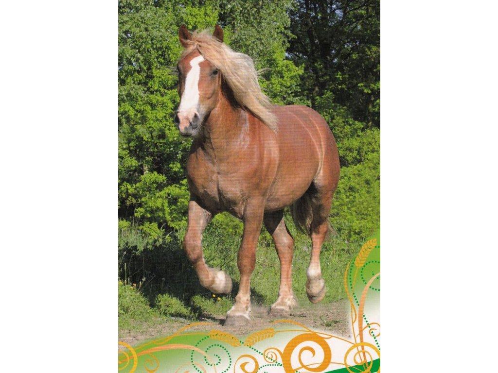Pohlednice kůň 35