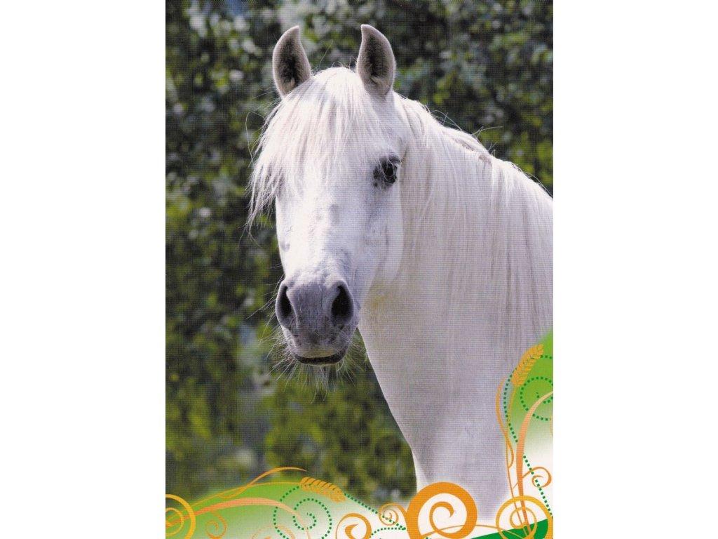 Pohlednice kůň 19