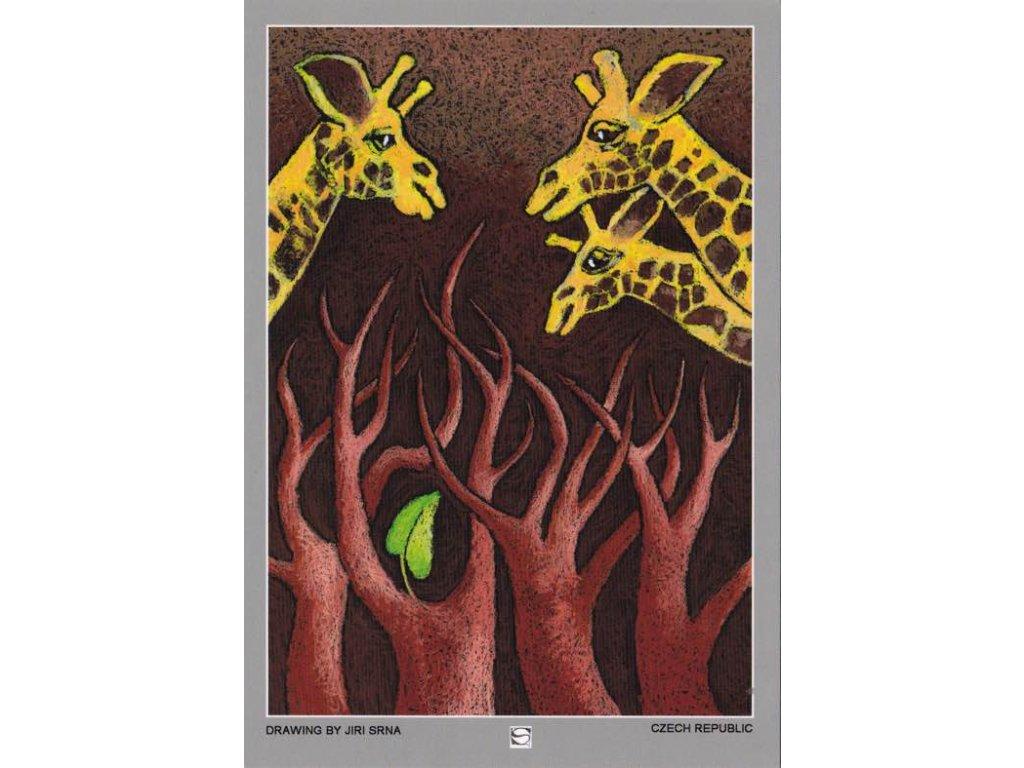 Pohlednice Potravinová krize, žirafy