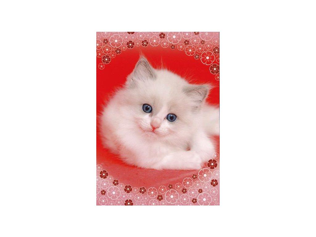 Pohlednice Kočka 48