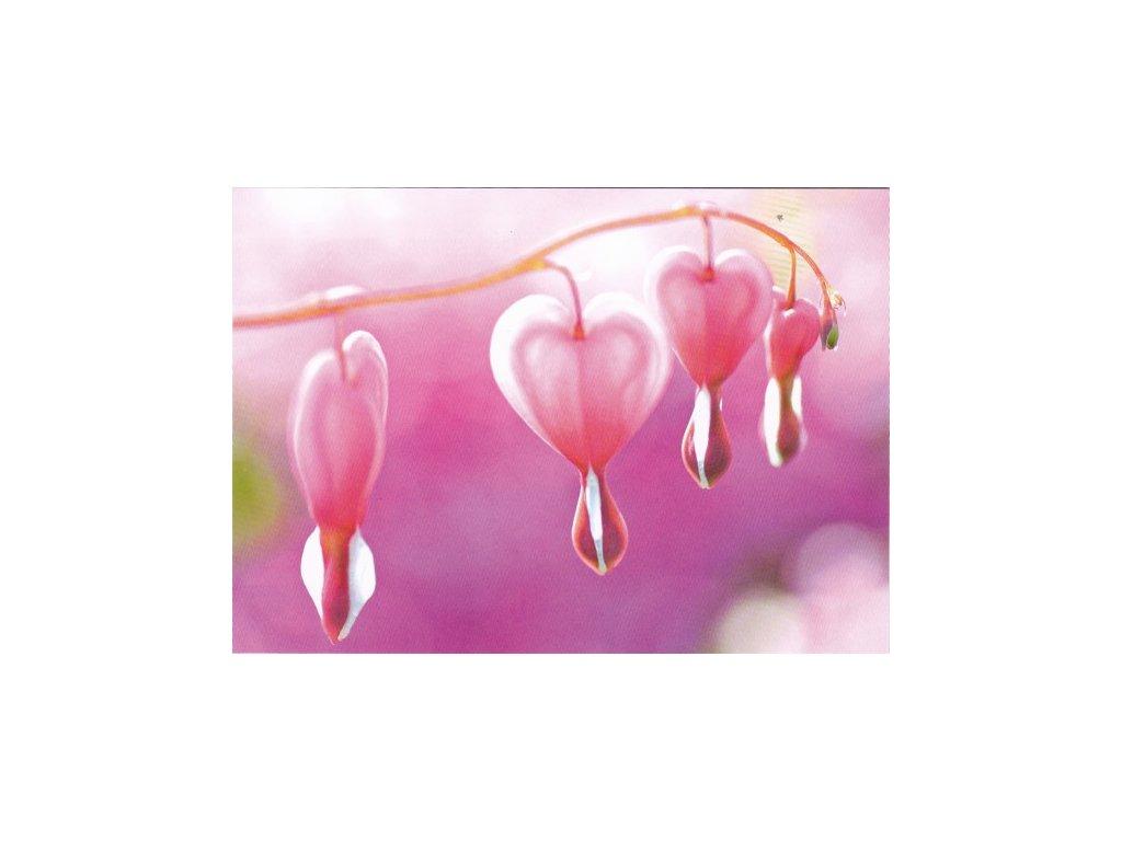 Pohlednice Květy srdce