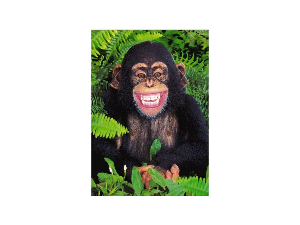 Pohlednice Veselý šimpanz