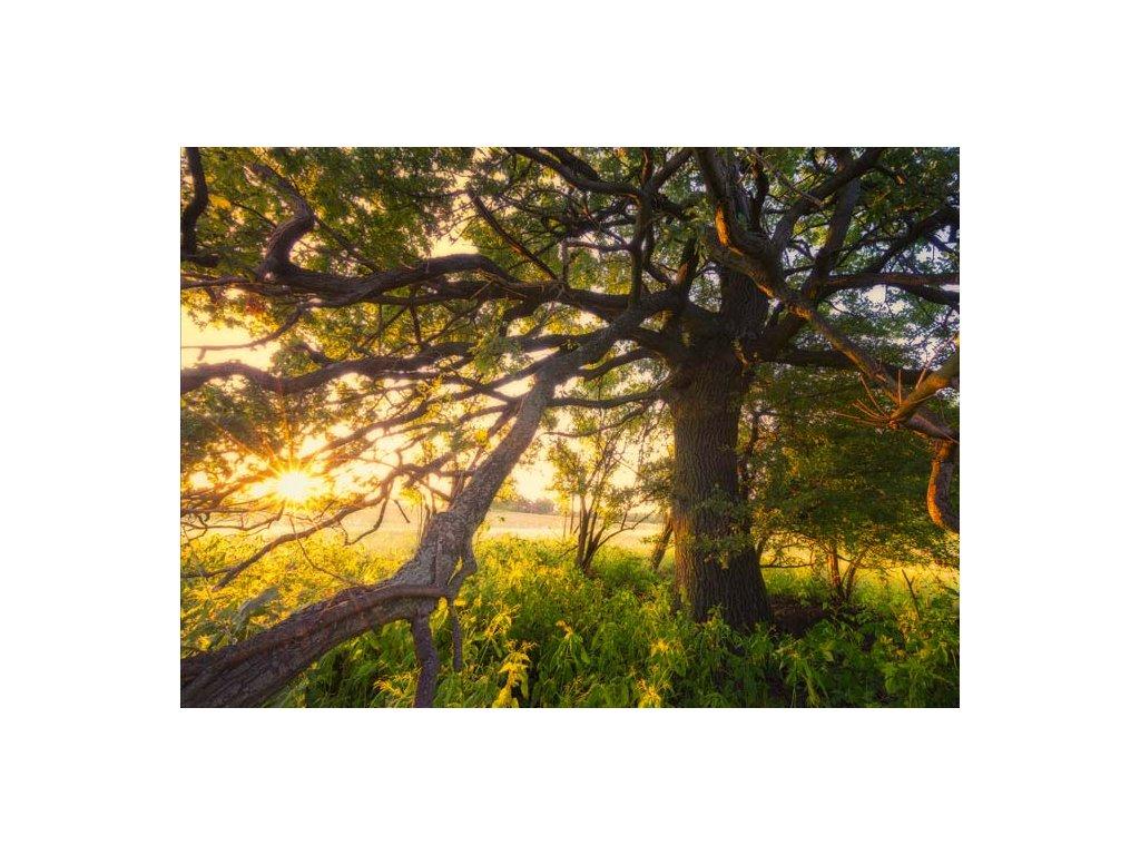 Pohlednice Moudrost stromů