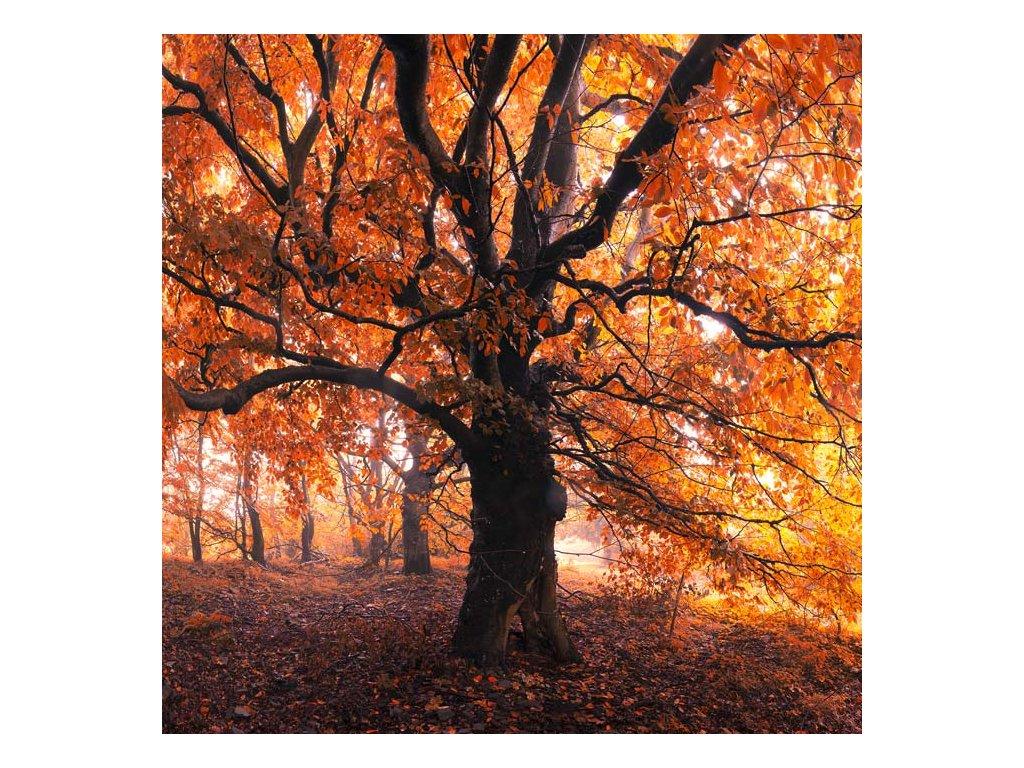 Pohlednice Strom oživlých snů