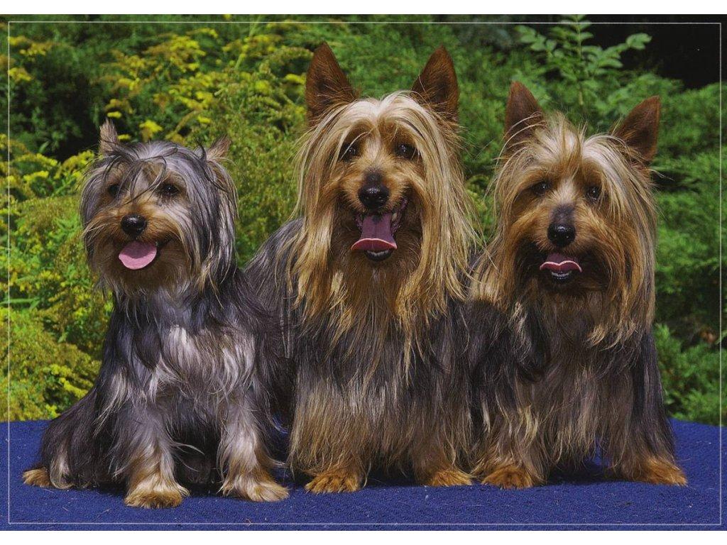 Pohlednice psi 5