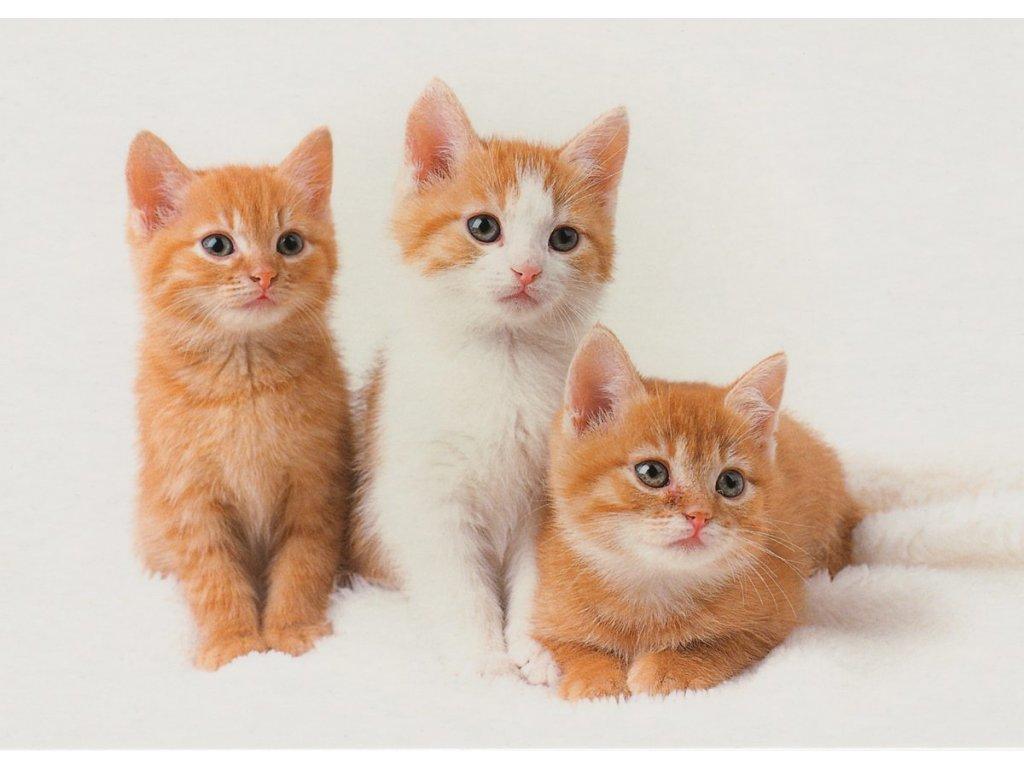 Pohlednice kočky 4