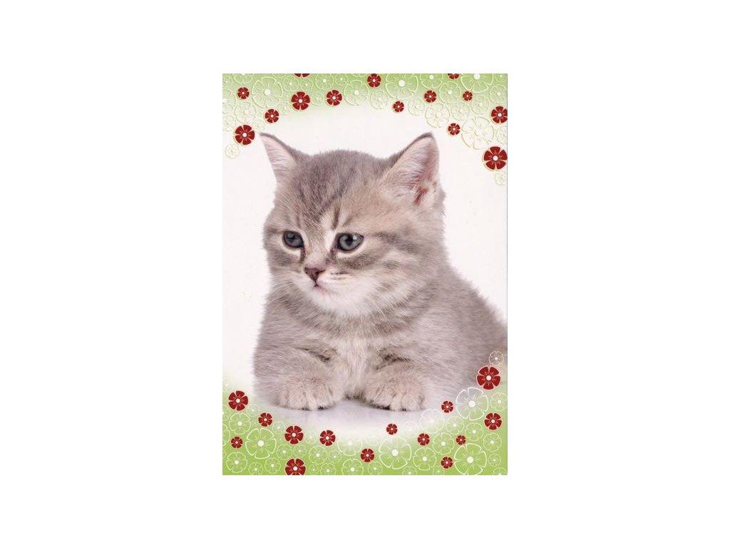 Pohlednice Kočka 43