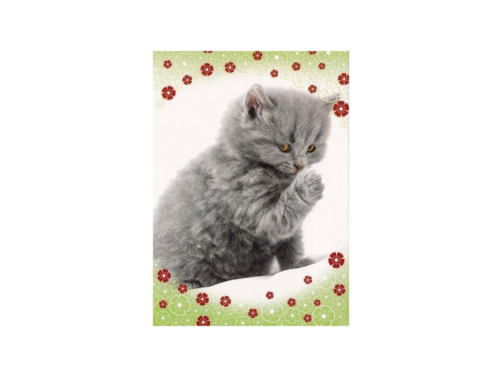 Pohlednice Kočka 44