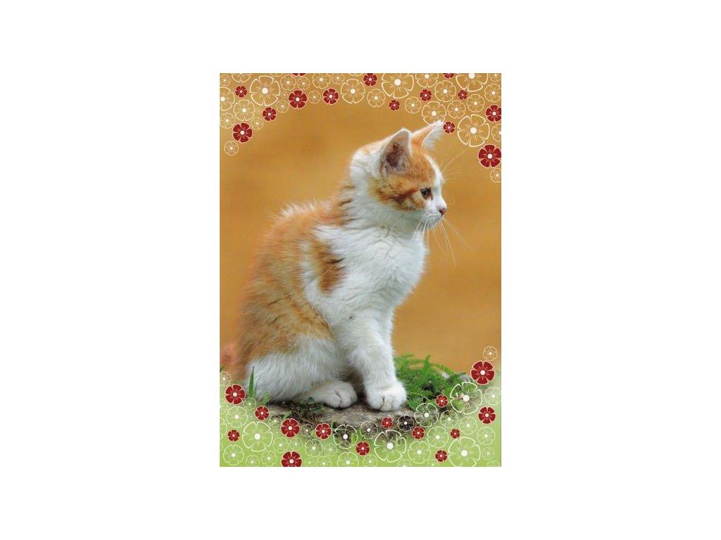 Pohlednice Kočka 45