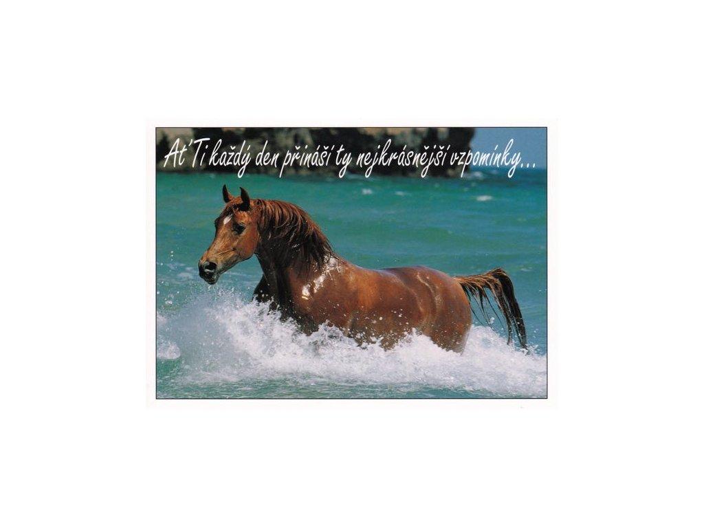 Pohlednice s textem (kůň)