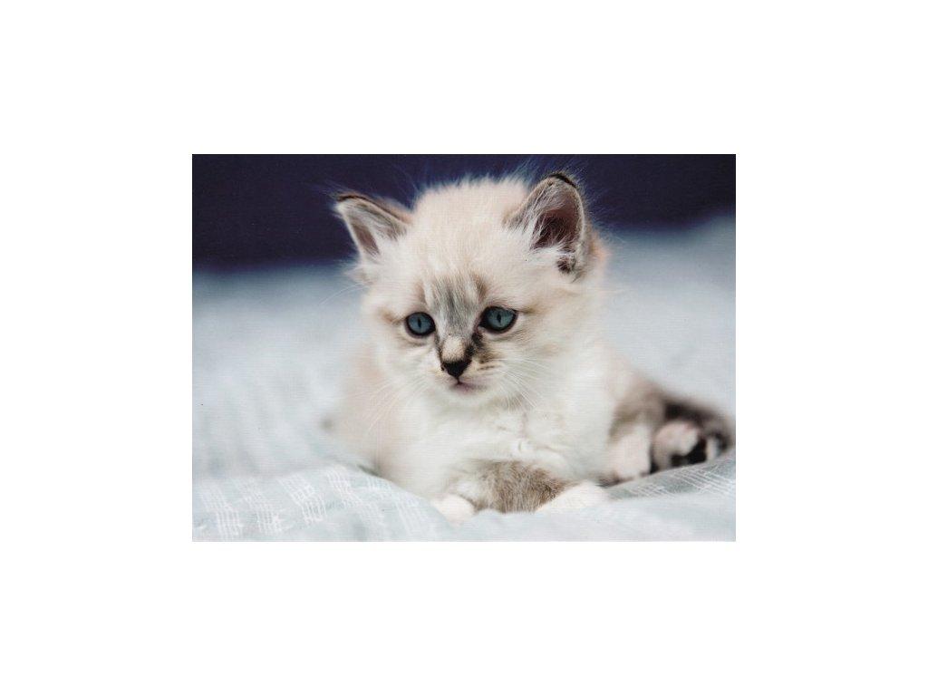 Pohlednice Kočka 7