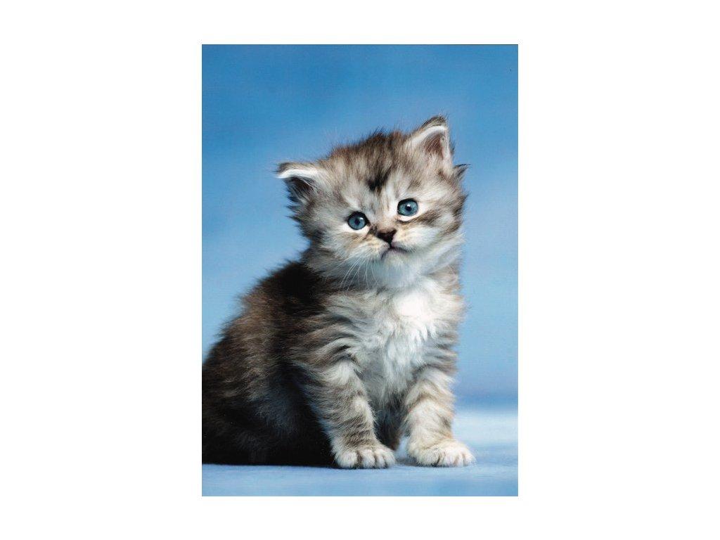 Pohlednice Kočka 8