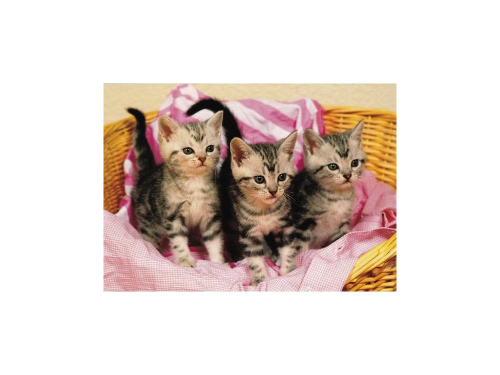 Pohlednice Kočky 9