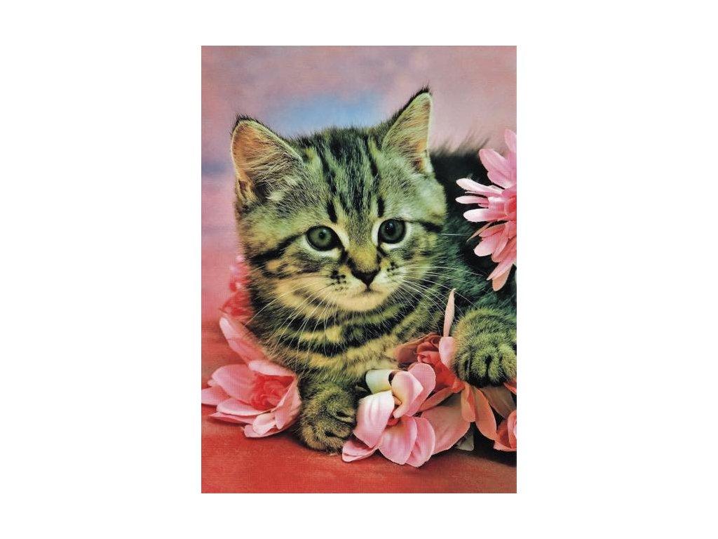 Pohlednice Kočka 12