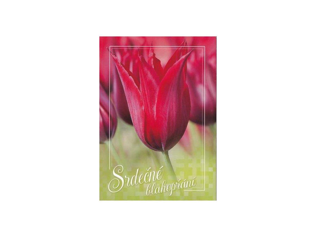 Pohlednice Blahopřání tulipán