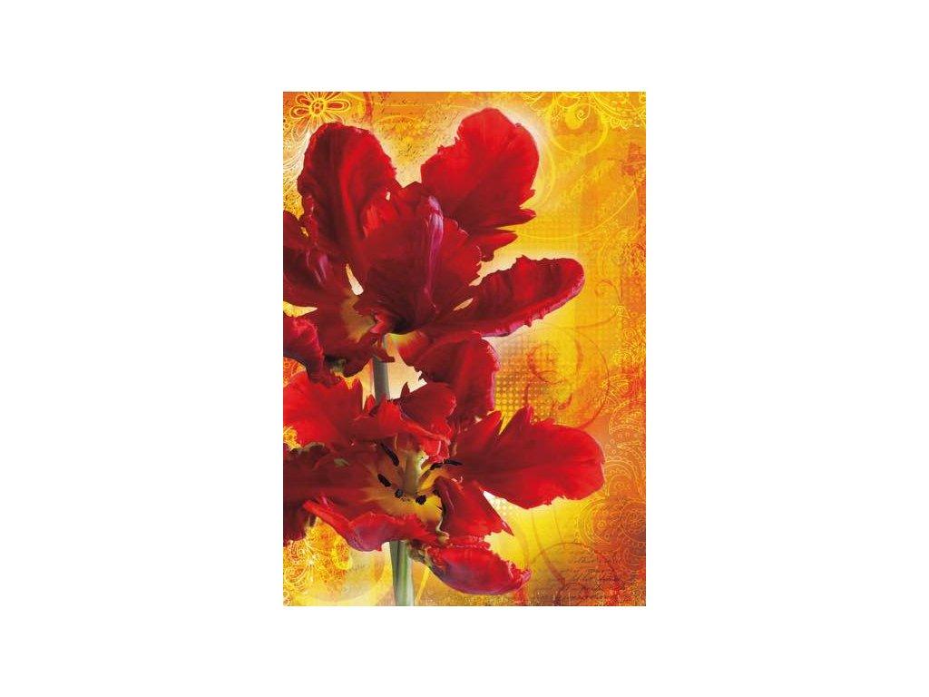 Pohlednice Tulipány