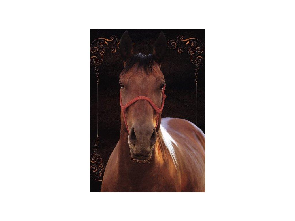 Pohlednice Kůň 37