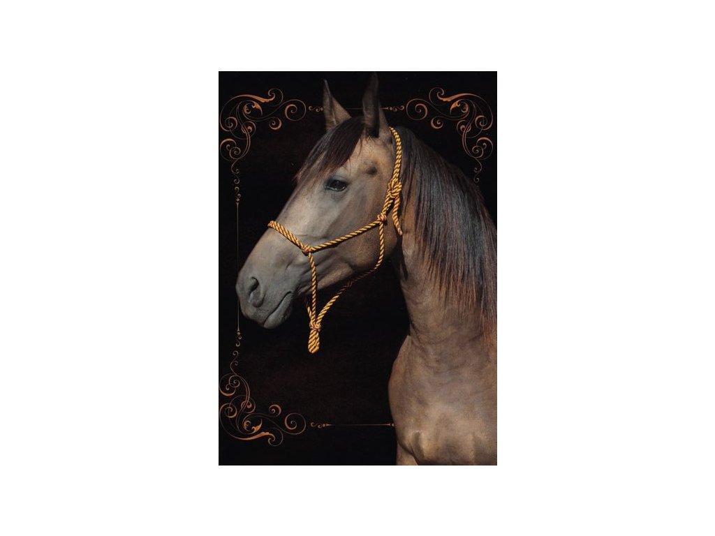 Pohlednice Kůň 39