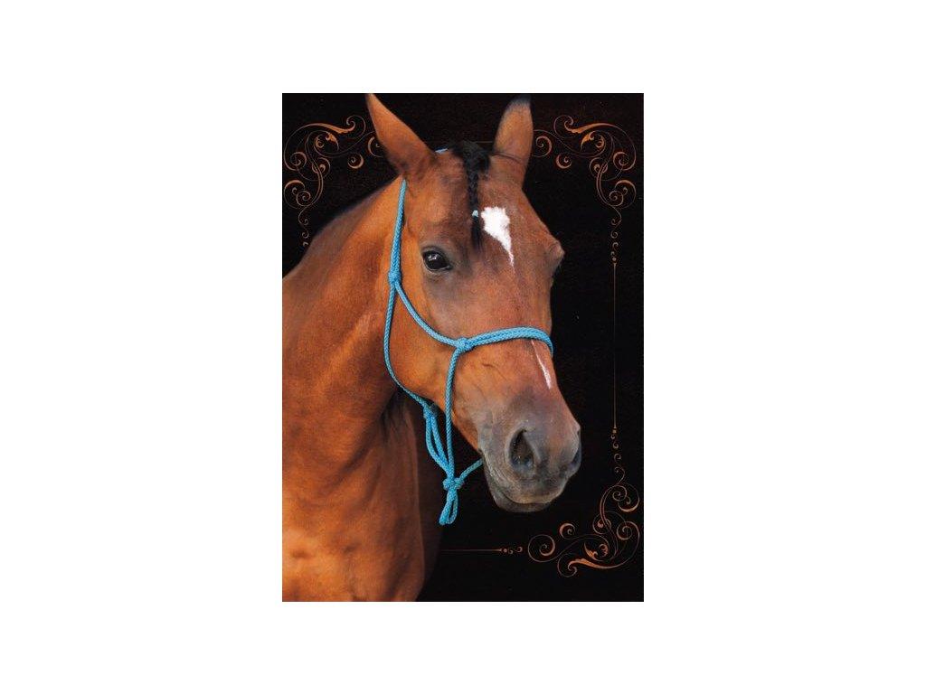 Pohlednice Kůň 40