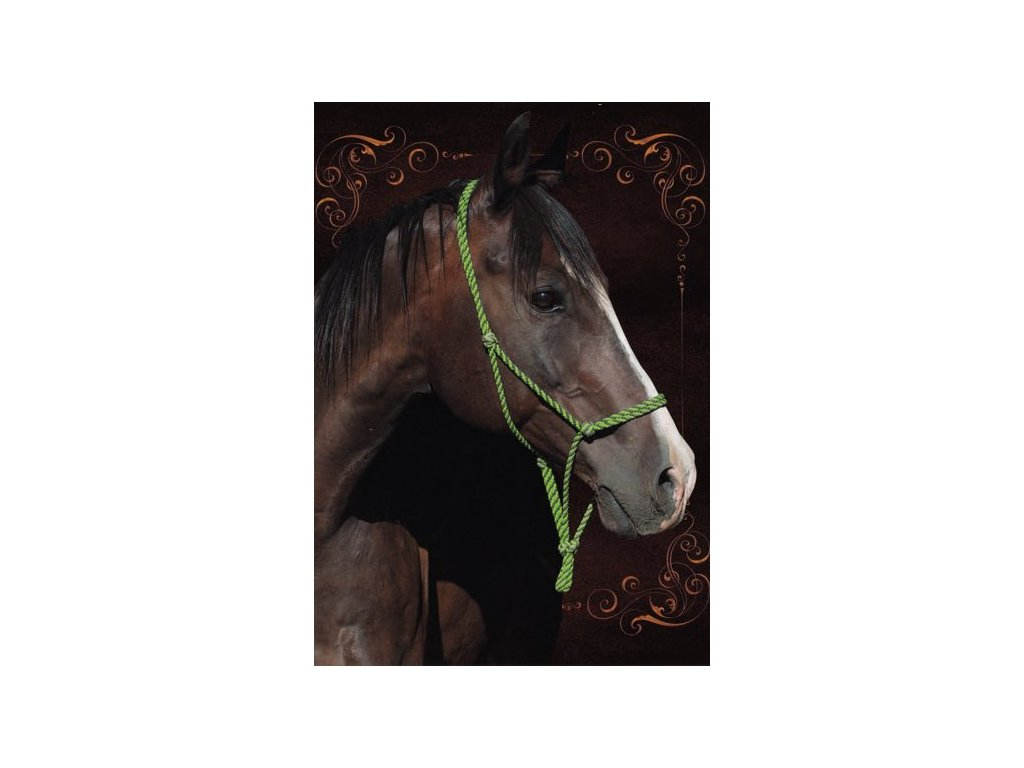 Pohlednice Kůň 41