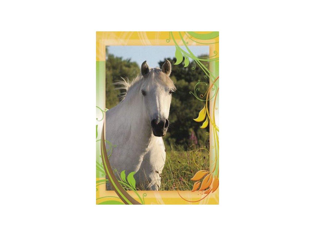 Pohlednice Kůň 42