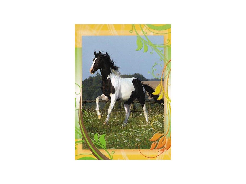 Pohlednice Kůň 43