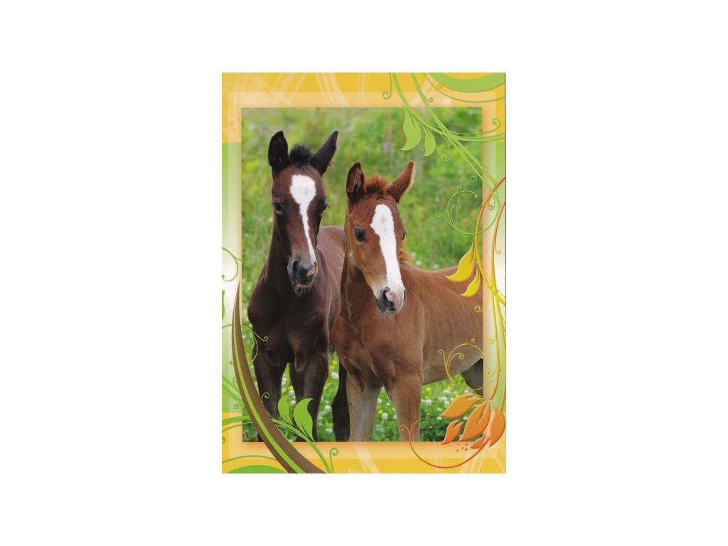 Pohlednice Koně 45