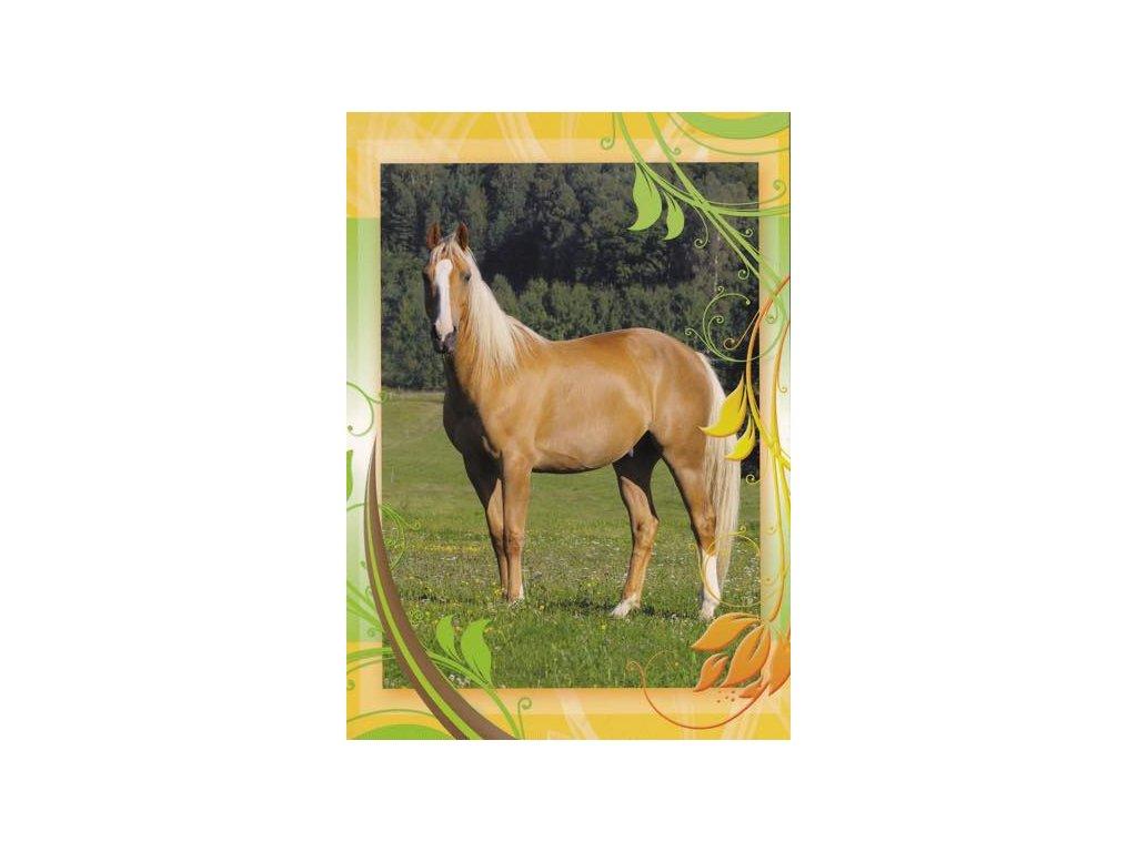 Pohlednice Kůň 47