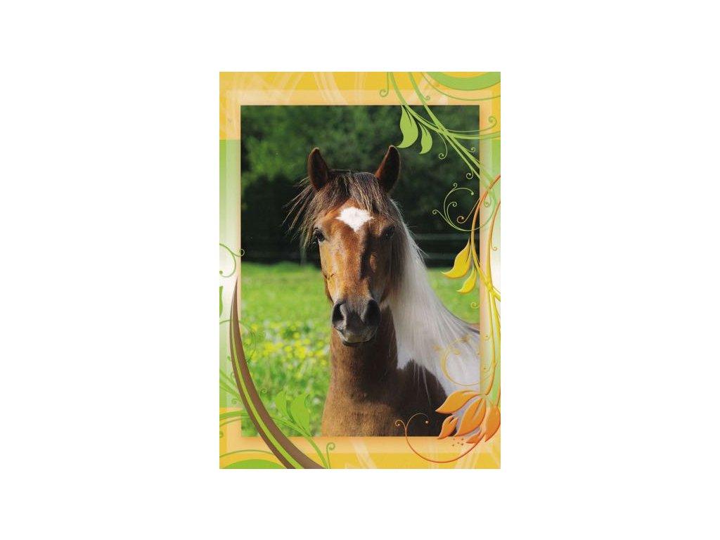 Pohlednice Kůň 48