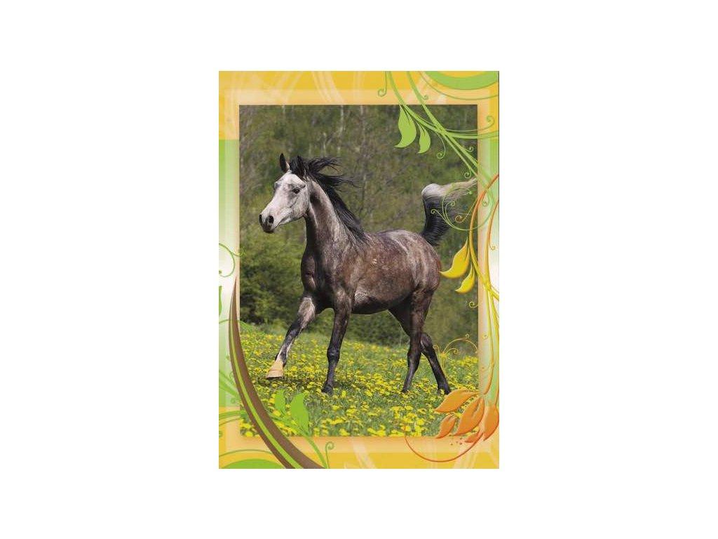 Pohlednice Kůň 49