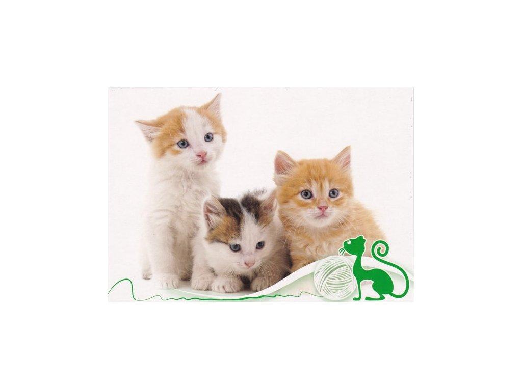 Pohlednice Kočky 53