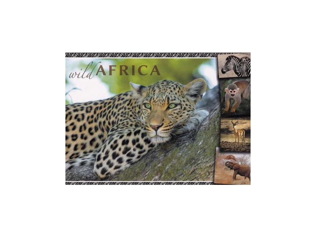 Pohlednice Leopard