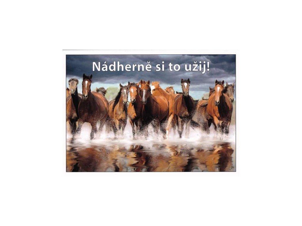 Pohlednice s textem (koně)