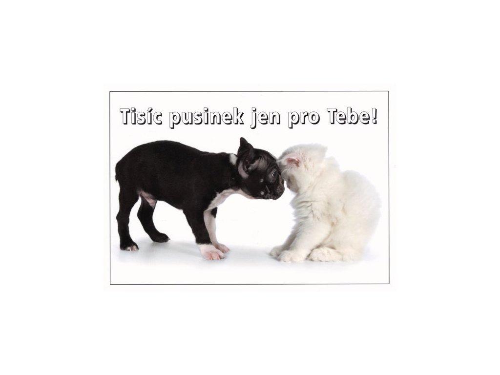 Pohlednice s textem (štěně a kotě)